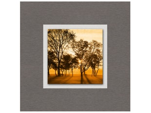 Glasbild Early Morning Sunlight 50x50cm n-7589 von Eurographics
